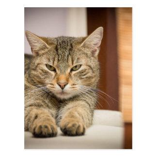 Naughty Cat Postcard