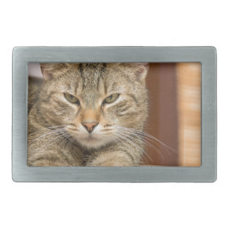 Naughty Cat Rectangular Belt Buckle
