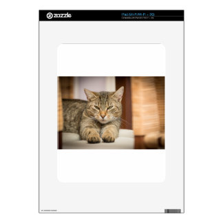 Naughty Cat Skin For The iPad