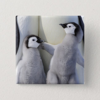 Naughty Emperor Penguin Chick Button