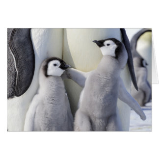 Naughty Emperor Penguin Chick Card