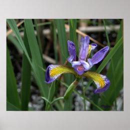 Naughty Iris print