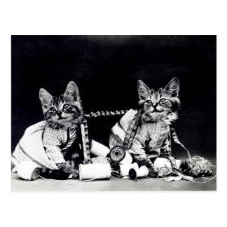 Naughty Kittens Postcard