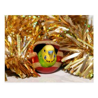 Naughty parakeet Christmas Postcard