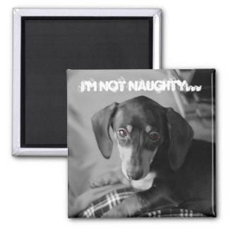Naughty weiner dog magnet