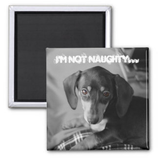 Naughty weiner dog magnets