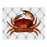 Nautical Crab Postcard