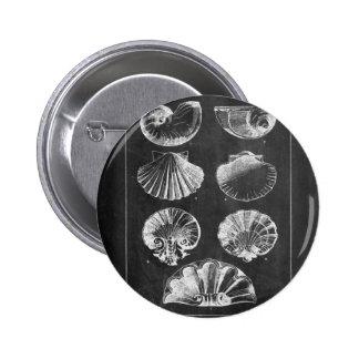 nautical modern chalkboard vintage sea shells pinback buttons