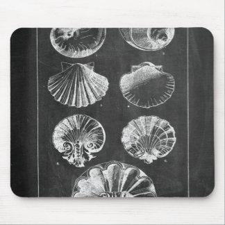 nautical modern chalkboard vintage sea shells mouse pad