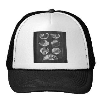 nautical modern chalkboard vintage sea shells trucker hat