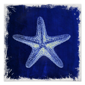 nautical sea shells beach blue starfish poster