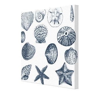 Nautical shells stretched canvas prints