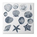 Nautical shells small square tile