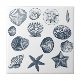 Nautical shells tile