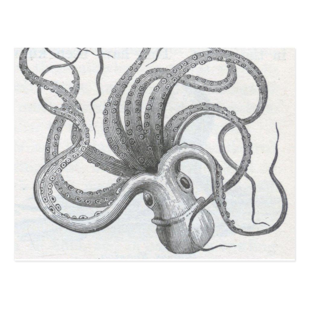 Vintage Kraken Illustration octopus vintage kraken