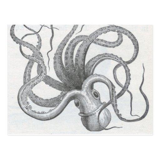 Nautical steampunk octopus vintage kraken design postcards