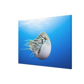 Nautilus compartimentado pompilius del nautilus impresiones de lienzo