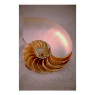Nautilus compartimentado póster