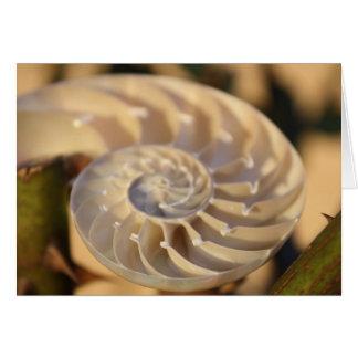 Nautilus compartimentado tarjeton