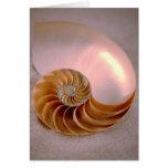 Nautilus compartimentado tarjetas