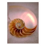 Nautilus compartimentado tarjetas postales