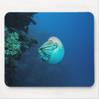Nautilus Great Barrier Reef Coral Sea Mouse Pad