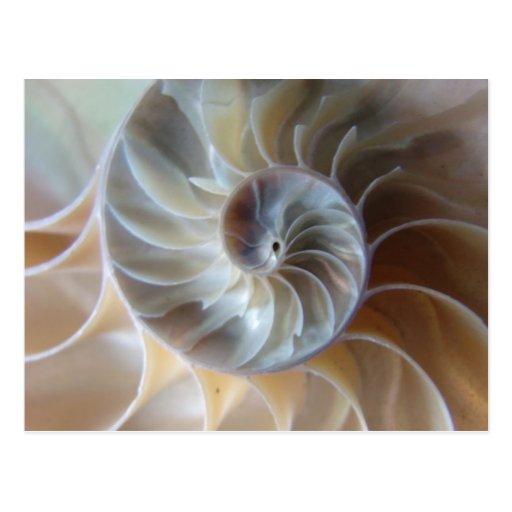 Nautilus interior postales
