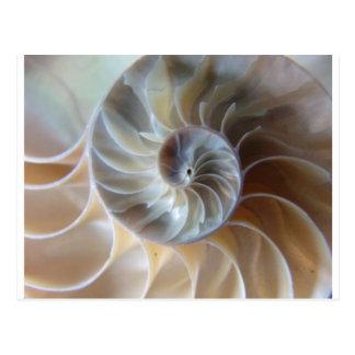 Nautilus interior tarjetas postales