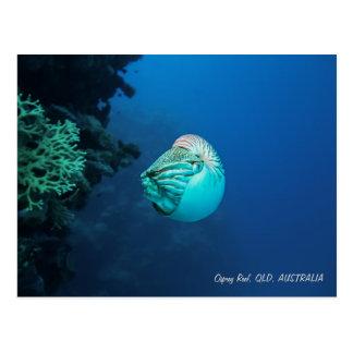 Nautilus Postcard