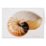 Nautilus seashell (Nautilus stenomphalus) Greeting Card