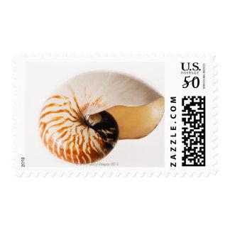 Nautilus seashell (Nautilus stenomphalus) Postage
