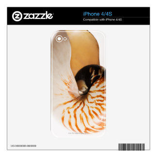 Nautilus seashell (Nautilus stenomphalus) Decals For iPhone 4