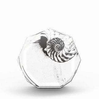 Nautilus shell 1 award