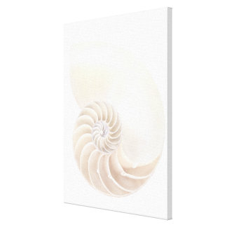 Nautilus shell, close-up stretched canvas prints