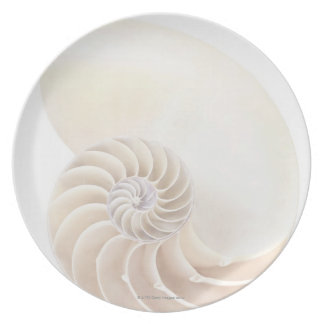 Nautilus shell, close-up dinner plate