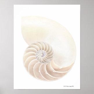 Nautilus shell, close-up poster