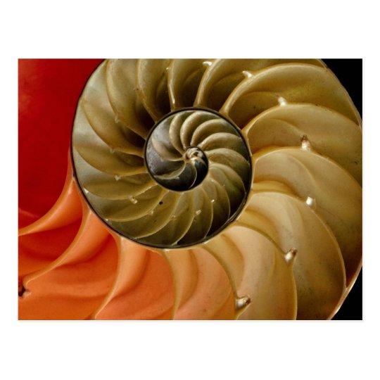 Nautilus shell Photo Postcard