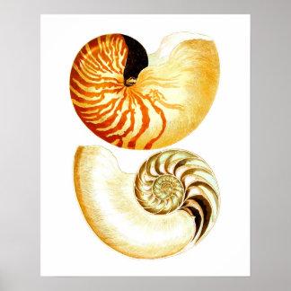 Nautilus Shell Seashell no.8 Beach Decor Art Print