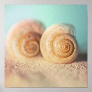 Nautilus Shells On Beach Poster