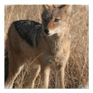 Navajo Coyote Invitation