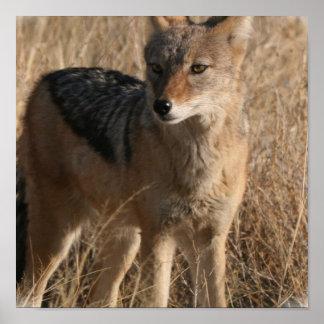 Navajo Coyote POster Print