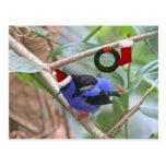 Navidad azul del pájaro postales