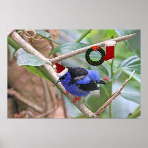 Navidad azul del pájaro poster