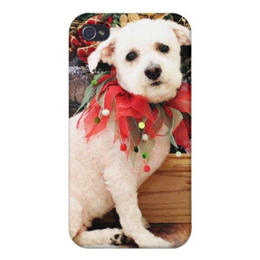 Navidad - Bichon Frise - acebo iPhone 4/4S Fundas