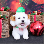 Navidad - Bichon Frise - Jack Esculturas Fotograficas