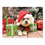 Navidad - Bichon Frise - margarita Postal