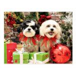 Navidad - Bichon Frise X - Bella y Lexi Postales