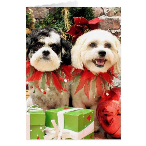Navidad - Bichon Frise X - Bella y Lexi Felicitación