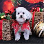 Navidad - Bichon Frise X - panda Esculturas Fotográficas