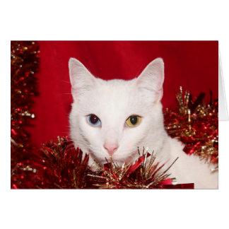 Navidad blanco del gato tarjeta de felicitación